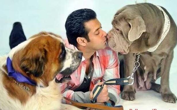 Salman-Dogs