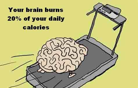 3. brain calories