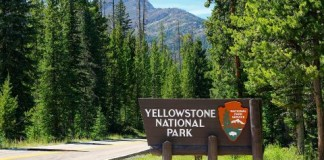 nature_yellowstone park