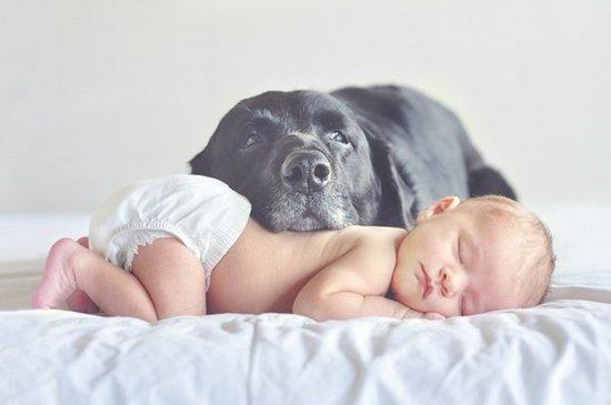 DogBabies-Khurki.net.9