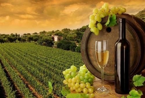 Wine_Tour-khurki.net