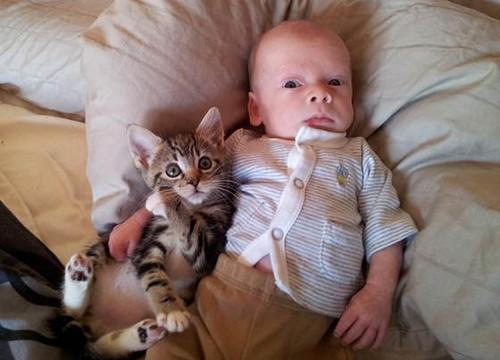 baby,cat,cute,animal-71d42fcfe1138f2786cc39a5b1022b49_h