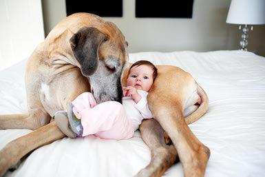 dog-meet-baby-resized