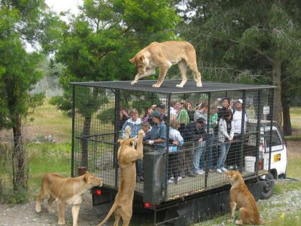 immense-pleasure-with-jim-corbett-national-park-tour_38568c1_3