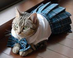 Cat in school dress