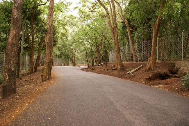 sandalwood forest at Marayoor
