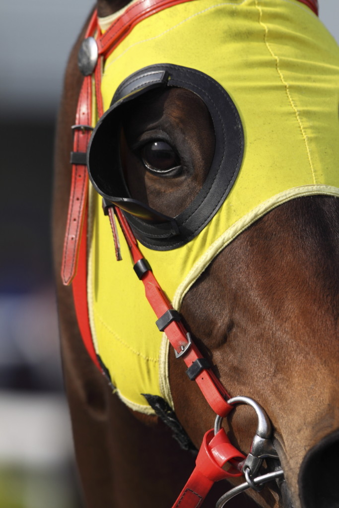 racehorse-khurki.net