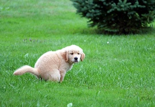 puppy-khurki.net