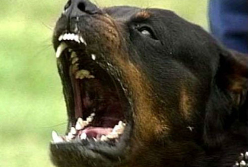 Rottweilers-khurki.net