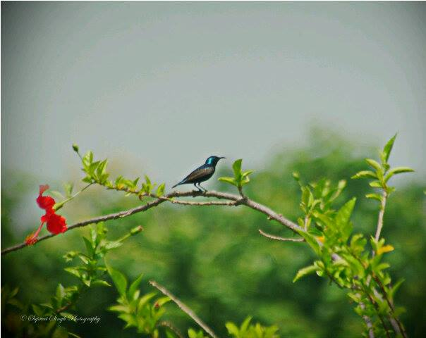Photographer: Supreet Singh