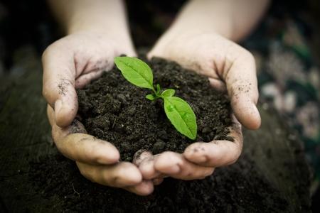 planting-khurki-net