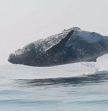 whale doing amazing tricks